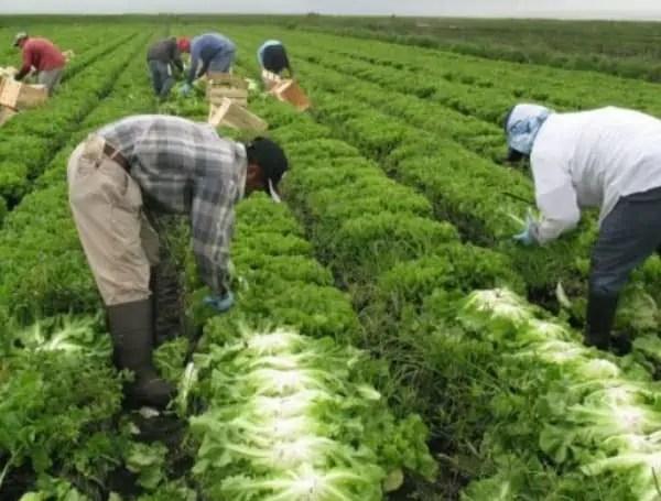 UF IFAS Florida Farmers