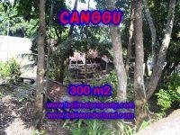 Jual tanah di Bali 300 m2 view sawah di Kerobokan