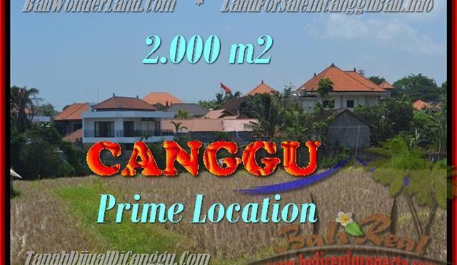 TANAH di CANGGU DIJUAL MURAH 2.000 m2 di Canggu Kayutulang