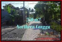 TANAH MURAH DIJUAL di CANGGU 2.5 Are di Canggu Pererenan