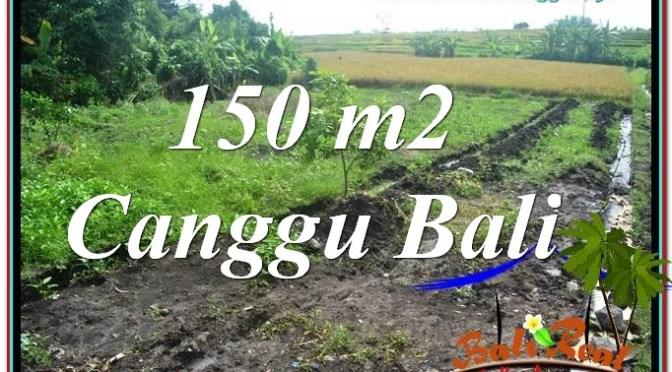 TANAH DIJUAL di CANGGU BALI 1.5 Are di Canggu Pererenan