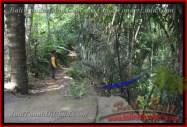 TANAH di UBUD BALI DIJUAL 11,400 m2 di Ubud Payangan