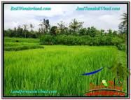 TANAH MURAH JUAL UBUD 12 Are View sawah dan kebun