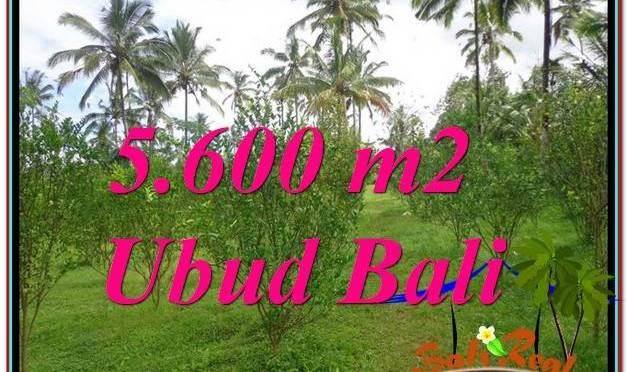 JUAL TANAH MURAH di UBUD 5,600 m2 View Tebing dan kebun