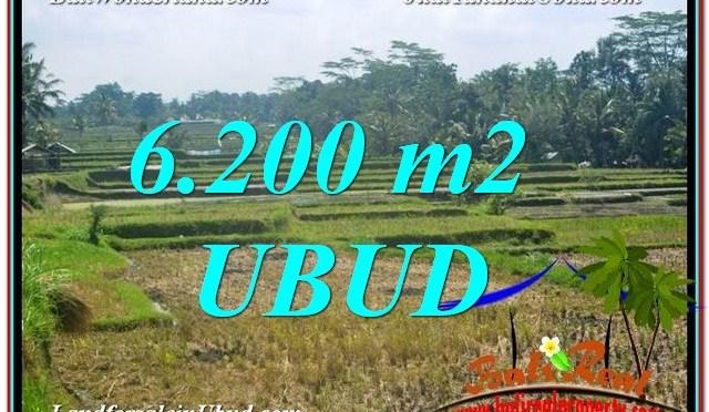 DIJUAL TANAH di UBUD 6,200 m2 di Ubud Payangan