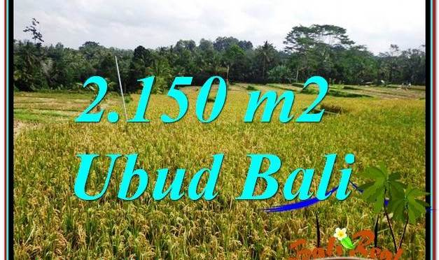 JUAL MURAH TANAH di UBUD BALI 2,150 m2 di Ubud Tegalalang