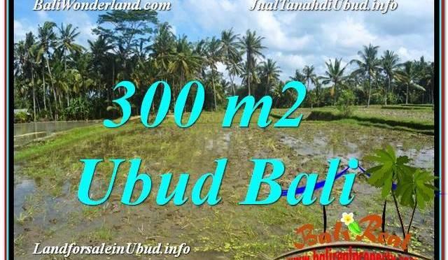 TANAH di UBUD DIJUAL MURAH 300 m2 di Ubud Pejeng