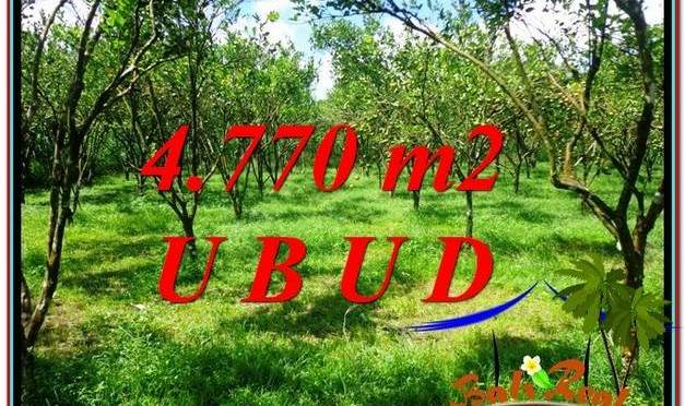 TANAH MURAH JUAL di UBUD BALI 48 Are View kebun
