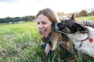 tanahoy.com animal_lover