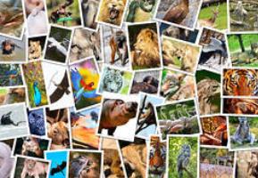 tanahoy.com animals