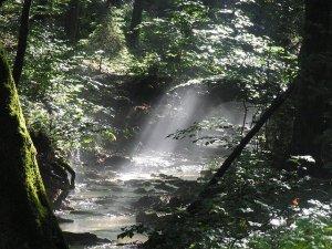tanahoy.com forest