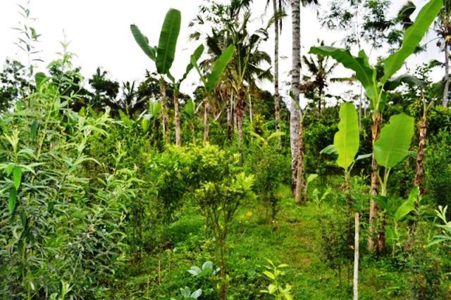 Tanah dijual di Ubud Bali super murah - TJUB013