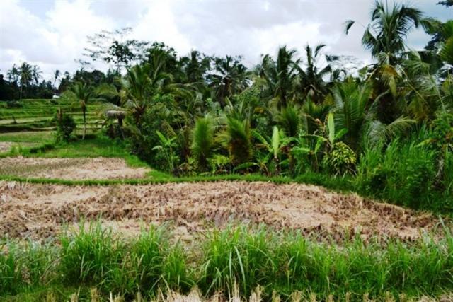 Tanah dengan view cantik di Tegalalang, Ubud - TJUB041