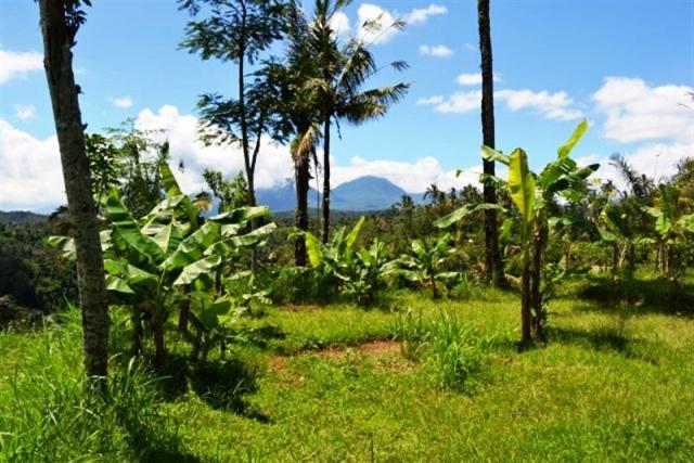 Tanah dijual Di uud dengan pemandangan Gunung dan Sungai - TJUB045