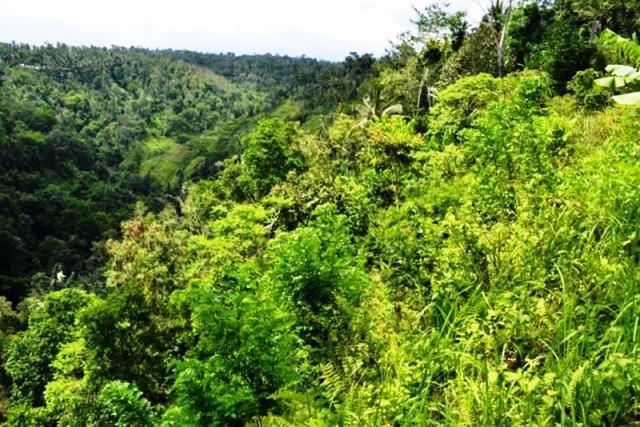 Tanah dijual di Ubud DI TEPI SUNGAI AYUNG -  TJUB065
