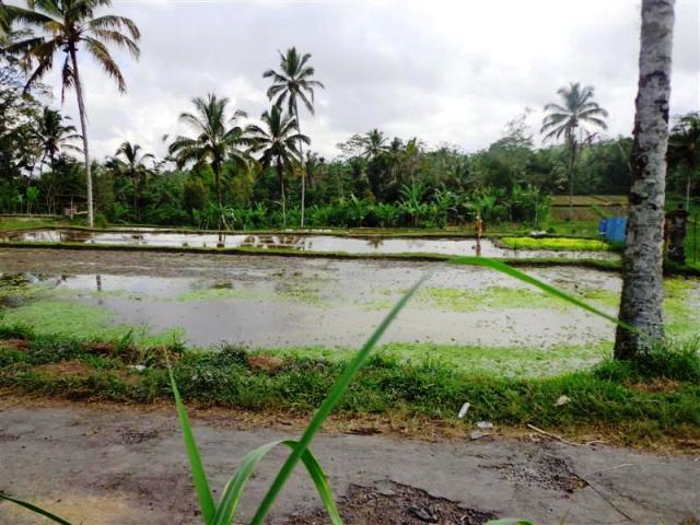 Tanah dijual di Ubud Payangan view sawah pinggir jalan ( TJUB098 )