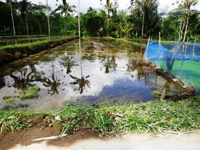 Dijual tanah di Ubud dengan pemandangan sawah ( TJUB101 )