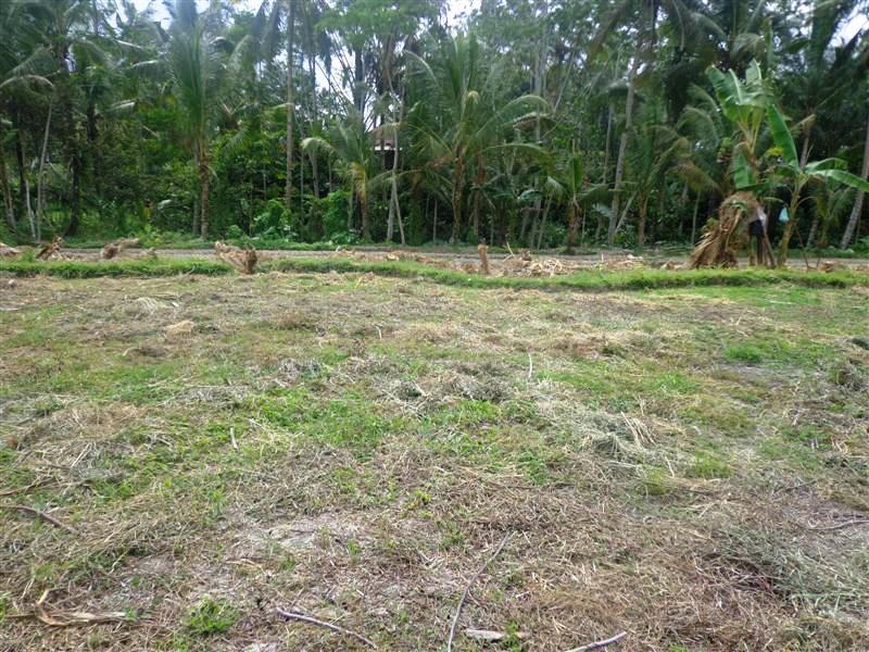 Tanah dijual di Ubud cocok Untuk villa  ( TJUB108 )