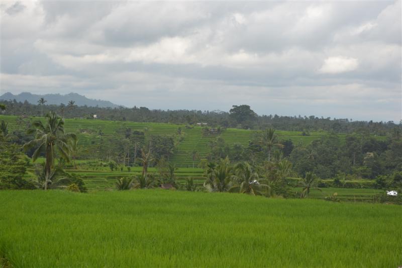 Jual tanah di Bali 40 Are di Tabanan Jatiluwih