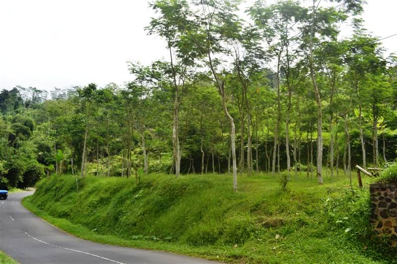 Tanah di Bali dijual 12,5 Are di Tabanan Baturiti