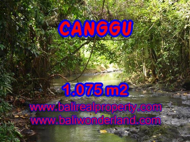 Tanah di Canggu Bali dijual 10.75 Are di Canggu Pererenan