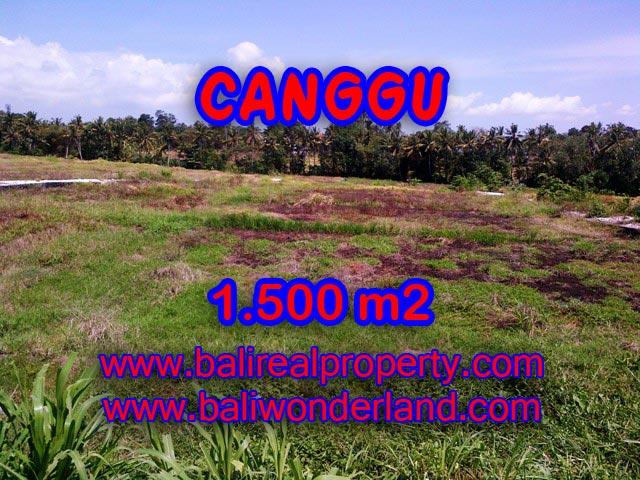 JUAL TANAH DI CANGGU 1,500 m2 View sawah di Tumbak Bayuh
