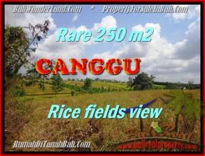 JUAL TANAH di CANGGU 2,5 Are View sawah lingkungan villa