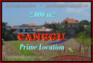 JUAL MURAH TANAH di CANGGU 2.000 m2  View sawah lingkungan villa