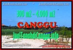 JUAL TANAH MURAH di CANGGU BALI 300 m2 View Sawah