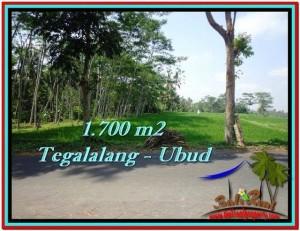 TANAH di UBUD BALI DIJUAL MURAH 1,700 m2  View Sawah