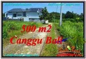 TANAH JUAL MURAH  CANGGU BALI 500 m2  View sawah lingkungan villa