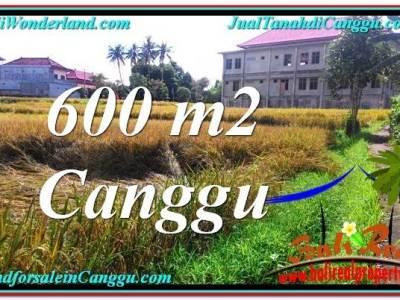 INVESTASI PROPERTI, TANAH DIJUAL di CANGGU BALI TJCG211