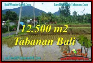 TANAH MURAH DIJUAL di TABANAN 12,500 m2 di Tabanan Penebel