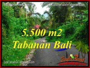 TANAH MURAH di TABANAN DIJUAL 5,500 m2 di Tabanan Penebel