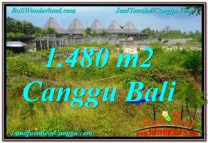 DIJUAL TANAH MURAH di CANGGU BALI 14.8 Are di Canggu Pererenan