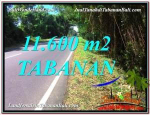 JUAL TANAH di TABANAN BALI 116 Are di Tabanan Selemadeg