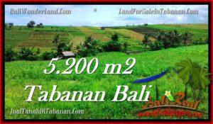 JUAL MURAH TANAH di TABANAN BALI 5,200 m2  View sawah dan sungai