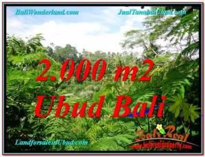 JUAL TANAH MURAH di UBUD Untuk INVESTASI TJUB611