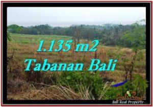 JUAL TANAH di TABANAN BALI 11.35 Are View sawah, laut dan gunung
