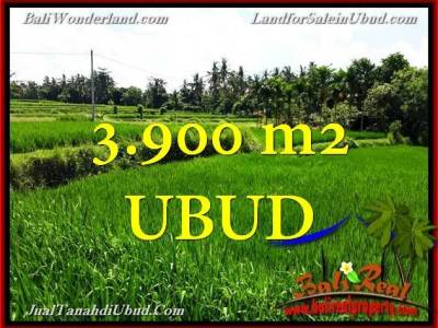 TANAH JUAL MURAH UBUD BALI 3,900 m2 View Sawah link Villa