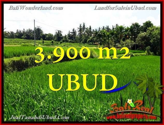 TANAH DIJUAL MURAH di UBUD BALI 3,900 m2 di Ubud Pejeng