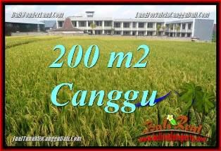 TANAH MURAH di CANGGU JUAL 2 Are VIEW SAWAH, LINGKUNGAN VILLA
