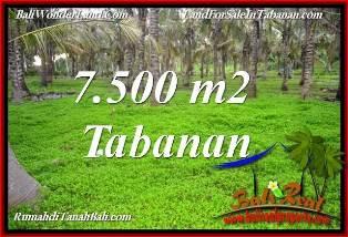 TANAH MURAH di TABANAN BALI 7,500 m2  VIEW KEBUN, LINGKUNGAN VILLA