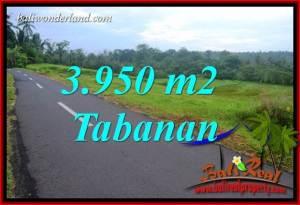 JUAL Murah Tanah di Tabanan Bali 3,950 m2 View Gunung dan Sawah