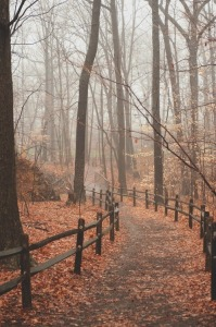 http://rebloggy.com/post/scary-cold-halloween-fall-forest-autumn-mist-haunted-darkness-leaves-woods-spook/60120070804