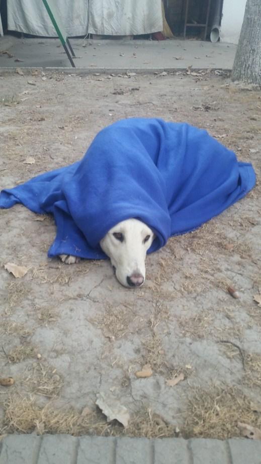 Contre le froid elle a reçu une jolie couverture en cadeau !