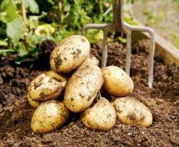 15457_satt-potatis_6