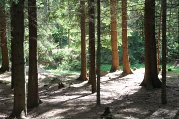 Aktion! Håll skogen ren