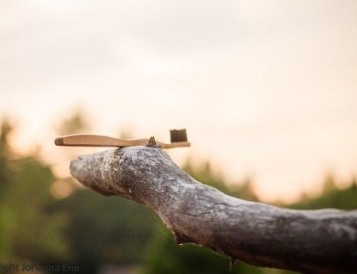 Tandborste i bambu på trädgren.
