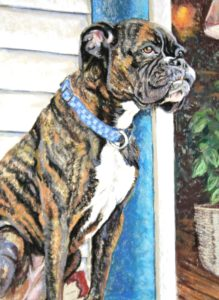 boxer with brindle coat standing guard at florist shop